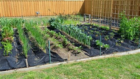 How To Start A Plant Nursery In Texas Thenurseries When To Start Planting A Vegetable Garden