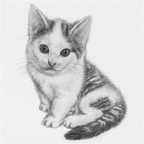 Drawing Kittens by Kitten Drawing By Jeroenpaint On Deviantart