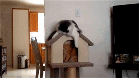 scratch fail funny cat gifs popsugar tech photo