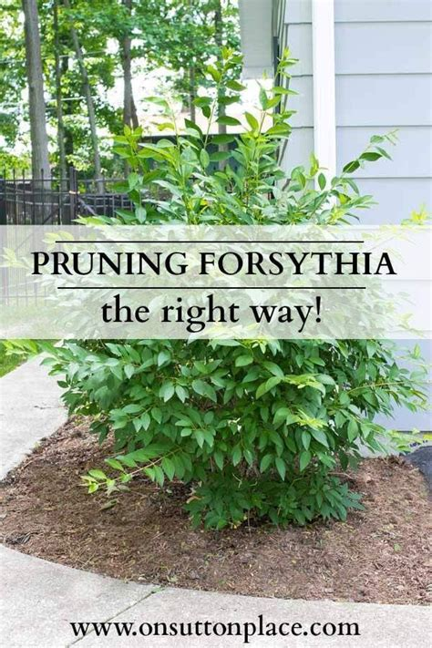 how to bring a plant back to life 17 best images about ydngdn prune divide maintain on
