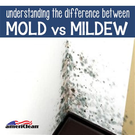 understanding the difference between mold and mildew