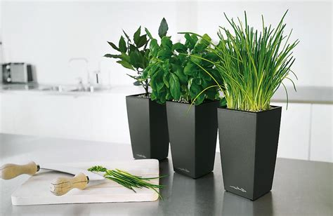 moderne zimmerpflanzen grose wohnzimmer pflanzen