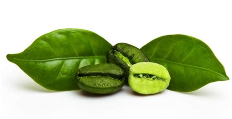 Green Coffee Beans Extract Reviews: What Doctors Say About