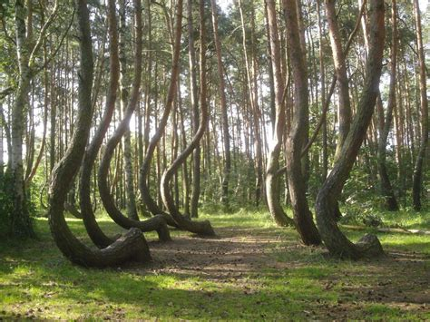crooked forest poland amazing unknown places to visit business insider