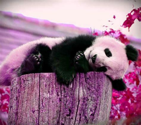 Panda Pink by Pink Panda Purrrrfect Animals Pink And Pandas