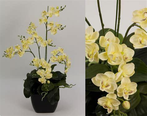 orchideen samen kaufen orchideen im topf orchideen im topf h30cm wei rosa