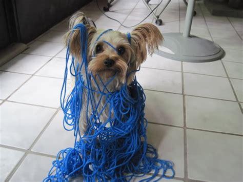 Tangled Up 164 bob tangled up in blue jeff meshel s world