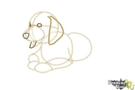 how to draw a golden retriever step by step how to draw a golden retriever puppy drawingnow