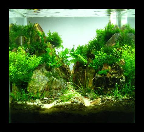 aquascape nano 17 best images about nano tank aquascape on pinterest 7
