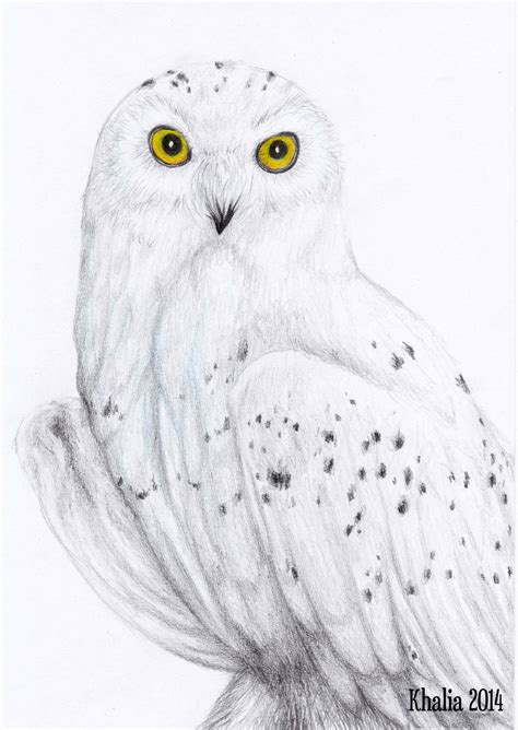 Snow Owl Papercraft By Elfbiter - snowy owl drawing by khaliaart deviantart on