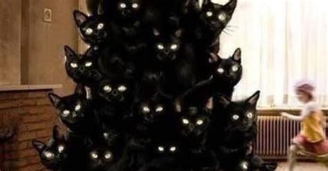 christmas tree made from black cats google search