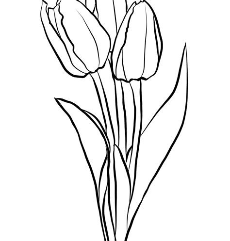 tulip leaf coloring page tulips flower coloring page free printable beautiful tulip