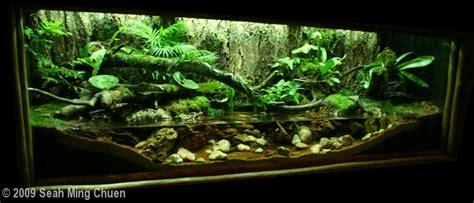 Best Low Light Aquarium Plants 2009 aga aquascaping contest 162