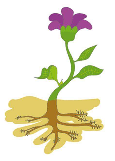 imagenes de flores interactivas ciencias interactivas la nutrici 211 n de las plantas