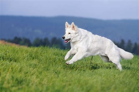 10 Facts About German Shepherd Dog You Need to Know