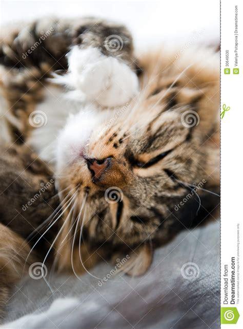 katze pinkelt auf bett katze die auf bett liegt stockfoto bild kitten