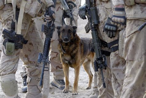 war dogs army dogs in www imgkid the image kid has it