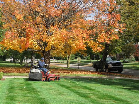fall lawn care steps and tips hirerush blog