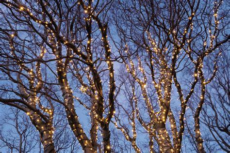 how to determine burnt christmas tree bulbs koppelbare kerstverlichting led 183 warm wit 183 starterset 183 100 ljes