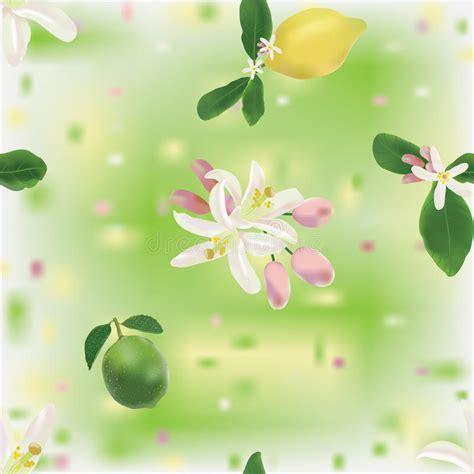 bloemen kalken naadloos patroon met citroen kalk en bloemen vector