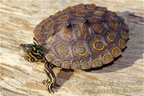 turtleidentification robertcoberly99