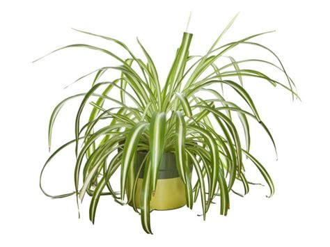 indoor small plants small indoor plants to decorate house photos pics 230289 boldsky gallery boldsky gallery
