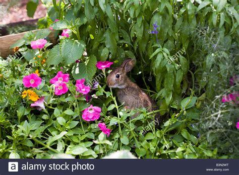 epcot flower and garden show epcot flower and garden show epcot center walt disney