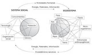 cadena trofica que pueda presentarse en la ciudad sistema social bebitho