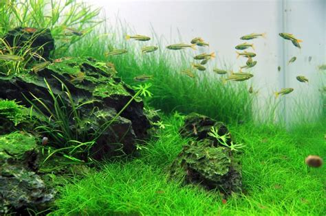 Aquascape Wallpapers ? WeNeedFun