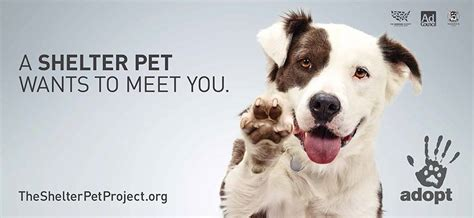 petfinders dogs follow friday shelter pet project petfinder members