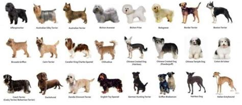 all types of dogs grey ghosts