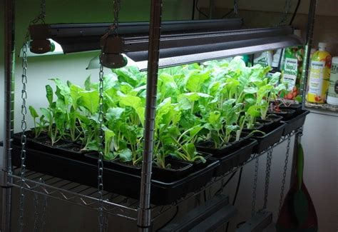 the ultimate indoor vegetable gardening guide