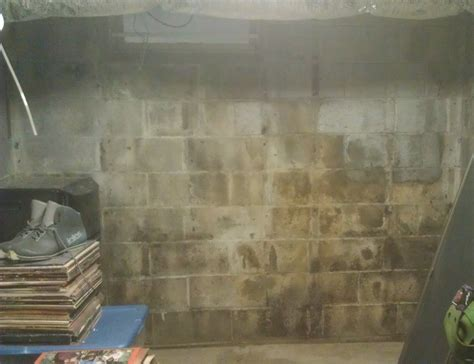 100 pictures of mold in the home white mold on basement
