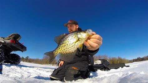 insane crappie bite ice fishing shallow  deep