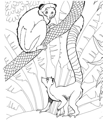 mouse lemur coloring page ring tailed lemur in a zoo coloring page supercoloring com