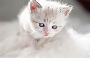 when do kittens change color do kittens change color petcha