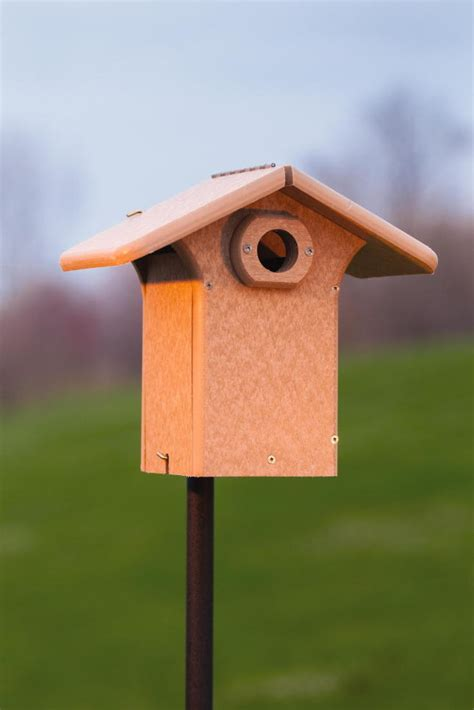 plastic bluebird houses