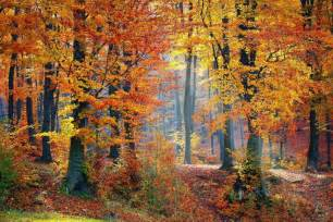 In Fall Fall Leaves Why Do Leaves Change Color In The Fall The