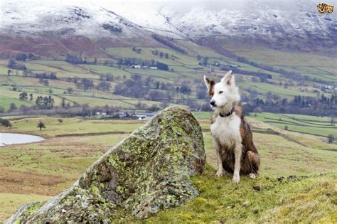Cottages To Rent In Lake District With Dogs by Pet Friendly Cottages In The Lovely Lake District