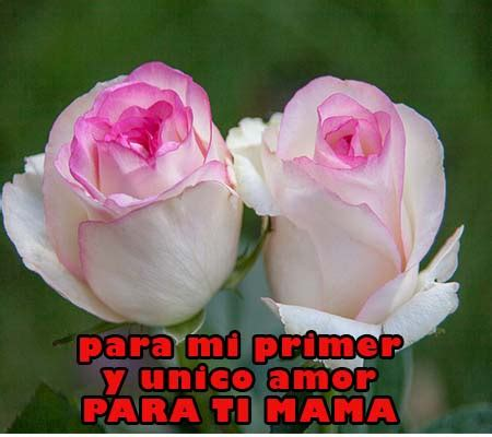 rosas para mi madre imagui rosas para mi madre rosas de amor