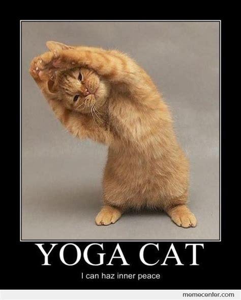 Meme Yoga - yoga cat by ben meme center
