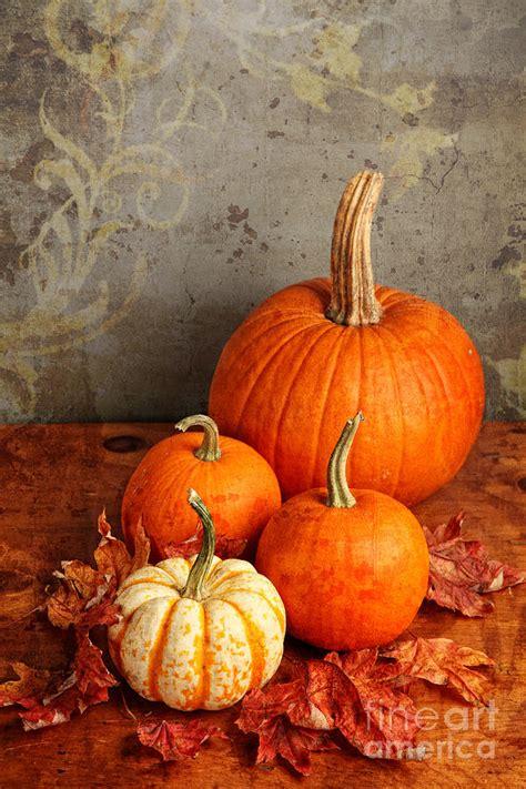 fall pumpkin and decorative squash photograph by verena matthew