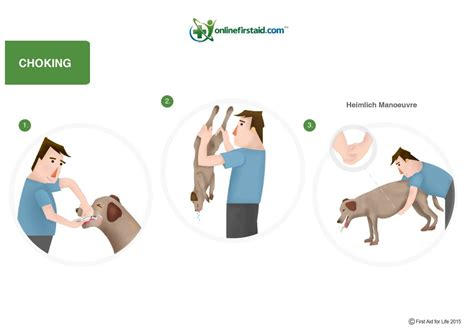 how to help a choking how to help your choking aid for pets