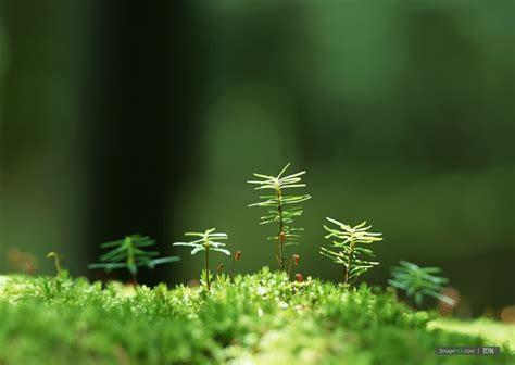 small beautiful pics 树苗图片 图蛙 imagewa com