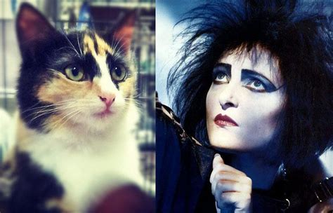 Victorian Goth goth cat looks like siouxsie sioux