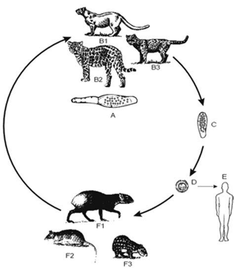 jaguar cycle diagram fox cycle diagram quotes
