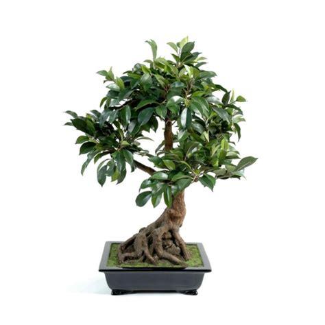 une plante dans une chambre quelles plantes choisir pour d 233 corer sa chambre