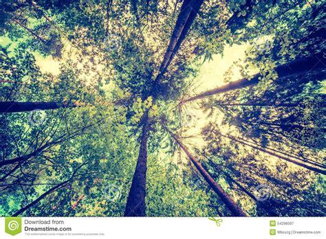 imagenes de paisajes vintage foto del vintage del paisaje verde hermoso del bosque de