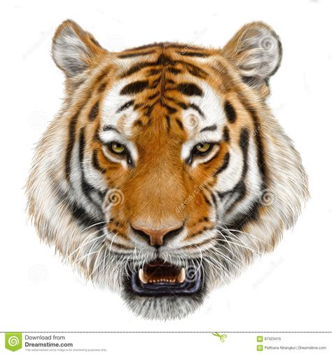 tiger draw and paint color isolated illustration