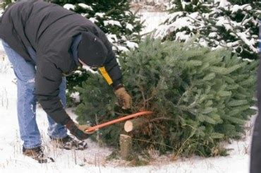 christmas tree permits kamas utah enjoy utah cut your own tree
